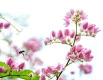 Flora rosa Fotografia Stock Libera da Diritti