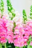 Flora rosada Fotografía de archivo
