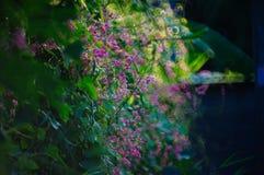 Flora rosada Imagen de archivo libre de regalías