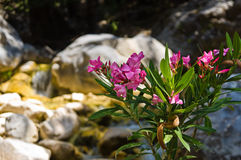 Flora of Samaria gorge Stock Photography