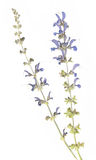 Flora secada Imágenes de archivo libres de regalías