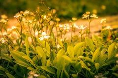 Flora selvaggia dal supporto Washington fotografia stock libera da diritti