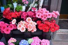 Flora shoppar Arkivbild