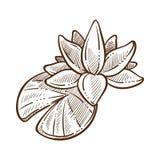 Flora simbolica tradizionale di Lotus dell'illustrazione monocromatica di vettore di schizzo della Cina illustrazione di stock