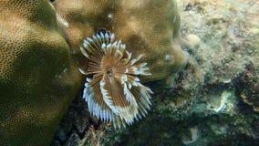 Flora subacuática debajo del mar Fotos de archivo