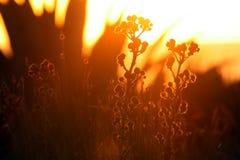 Flora sulla costa di tramonto Fotografia Stock