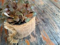 Flora sulla tavola Fotografie Stock Libere da Diritti