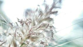 Flora, sumário Imagem de Stock Royalty Free