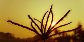 Flora and sun,  abstract Royalty Free Stock Photos