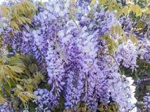Flora Surrounding Sunnyvalle stock foto