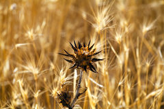 Flora típica de prados españoles Imagenes de archivo