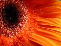 flora tła makro Obrazy Royalty Free