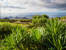 Flora of Tenerife Stock Images