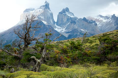 Flora of Torres del Paine. National park of Chile Royalty Free Stock Photography