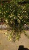Flora tropical foto de stock royalty free