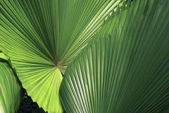 Flora tropical fotos de stock