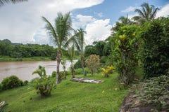 Flora tropical de la selva tropical Foto de archivo libre de regalías