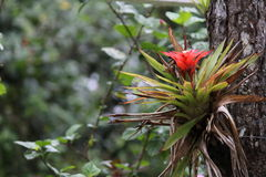 Flora. From the tropical rainforest in Cerro Azul, Panama Stock Photo