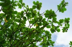Flora tropical verde Imágenes de archivo libres de regalías