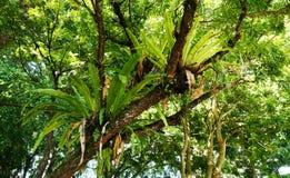 Flora tropicale della foresta pluviale del Borneo Fotografia Stock Libera da Diritti