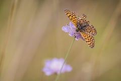 Flora und Fauna Stockfoto
