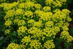 Flora und Fauna Lizenzfreie Stockfotografie