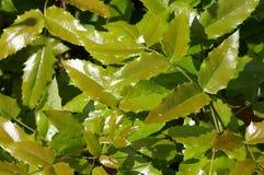 Flora und Fauna Lizenzfreies Stockfoto