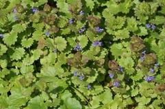 Flora und Fauna Stockfotografie