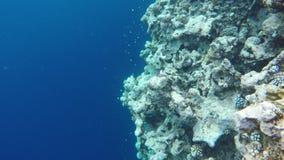 Flora und Fauna nahe dem blauen Abgrund stock video footage