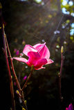 Flora under sunshine. In the winter season, Thailand Stock Photos