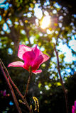 Flora under sunshine. In the winter season, Thailand Royalty Free Stock Image