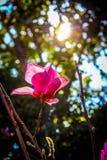 Flora unter Sonnenschein Lizenzfreies Stockbild