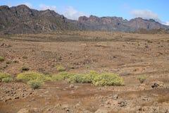 Flora van Gran Canaria, gele bloemen van Adenocarpus-foliolosus royalty-vrije stock afbeeldingen