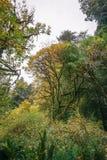 Flora van het Californische sequoiabos royalty-vrije stock foto