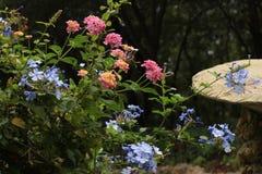 Flora varia Immagini Stock
