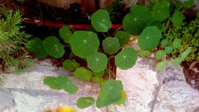 flora verde imagem de stock