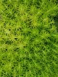 Flora verde immagine stock libera da diritti