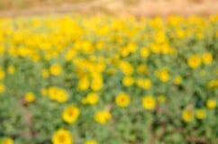 Flora verde intenso e gialla della luce dell'estratto del bokeh della sfuocatura Immagini Stock Libere da Diritti