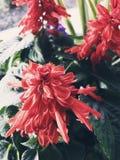 Flora vermelha fotografia de stock