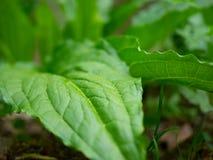 Flora vibrante immagine stock