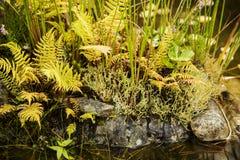 Flora vid dammet Arkivbilder