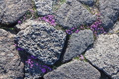 Flora in volcanic desert wasteland Royalty Free Stock Photography