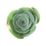 Flora von Gran Canaria - kleine Aeoniumanlage Lizenzfreies Stockbild