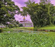 Flora at the water. This locationat the Botanical Garden from Bogor Royalty Free Stock Photos