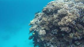 Flora y fauna de arrecifes de coral almacen de video