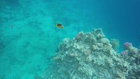 Flora y fauna de arrecifes de coral metrajes