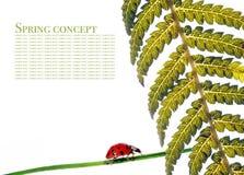 Flora y mariquita imagen de archivo libre de regalías