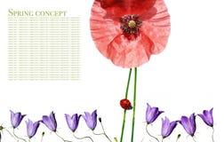 Flora y mariquita fotos de archivo libres de regalías