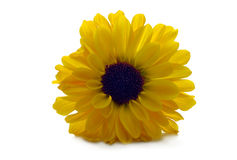 Flora - Yellow Flower Royalty Free Stock Image