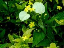 Floraachtergrond met inbegrip van bloemen, bladeren Stock Afbeelding